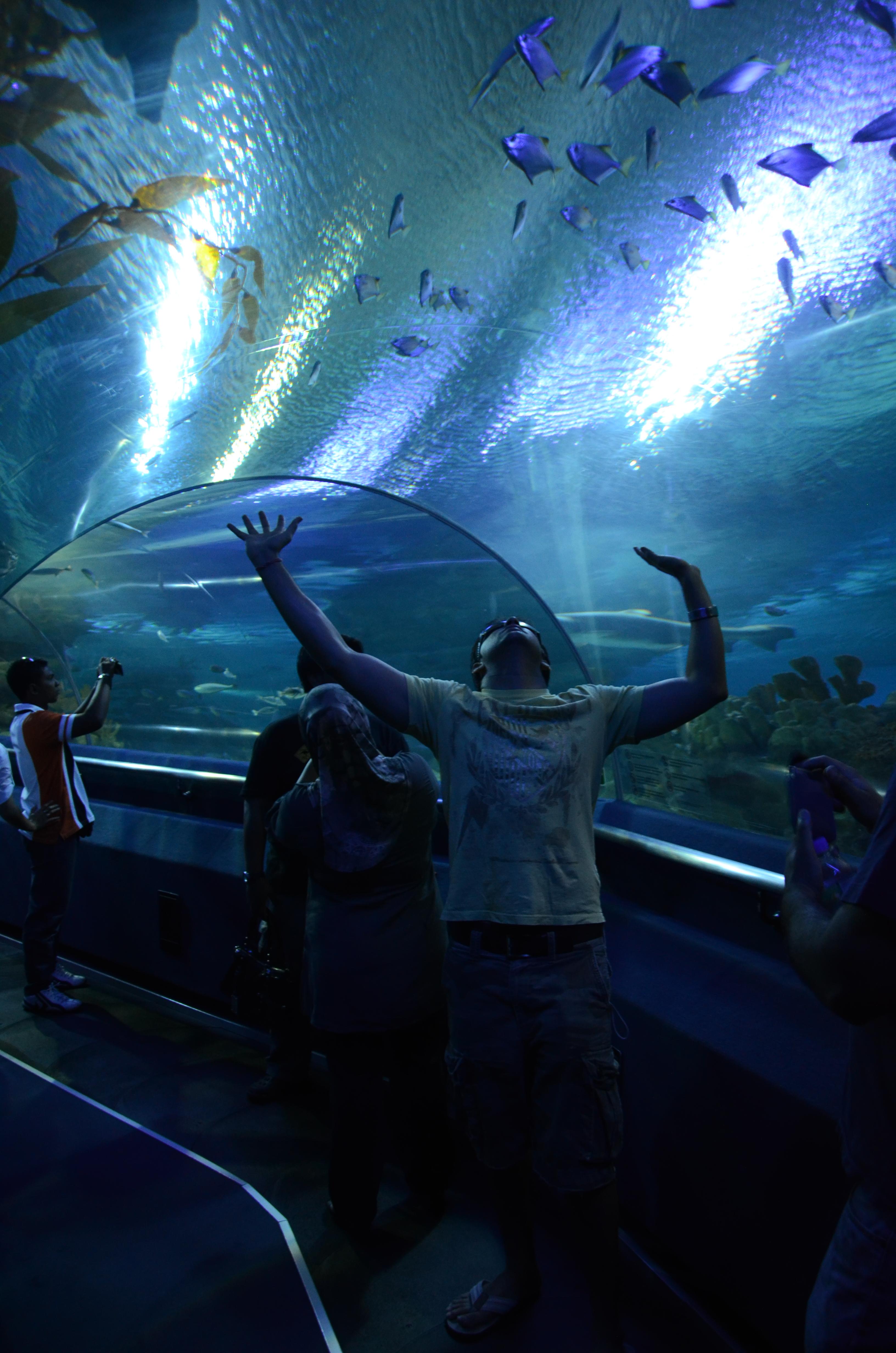 Acheter aquarium juwel rio 125 for Aquarium a acheter